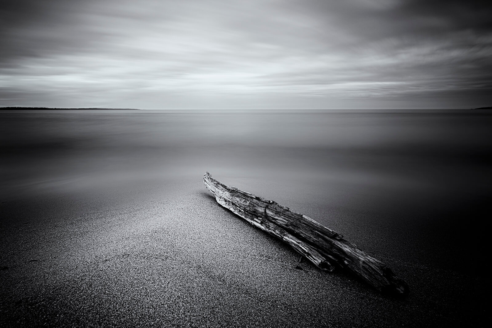 Driftwood on the beach of Salusand, Sweden. Copyright Joakim Jormelin